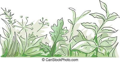 Herbs Border - Border Illustration Featuring Different Herbs