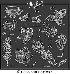 Herbs chalk sketch icons for herbal tea, cafeteria or ...