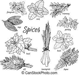 herbs., colección