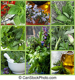 Herbs Collage - Collage of fresh herb images. Includes basil...