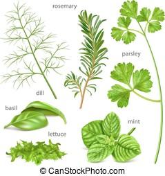 Herbs collection. - Big herbs collection. Vector...