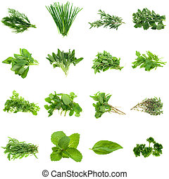 Herbs Collection - Collection of fresh herbs, isolated on ...