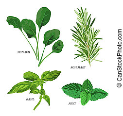 Herbs - Clip-arts of various herbs