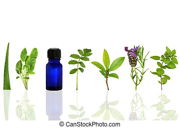 Herbs for Healing - Herb leaf and flower selection with an...