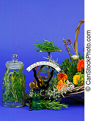 Herbs for medicine or cooking on blue background