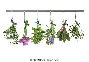 Herbs Hanging and Drying - Herb leaf and flower bunches of...