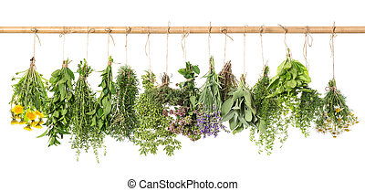 Herbs hanging isolated on white. basil, rosemary, thyme, dandelion, camomile