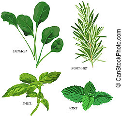Herbs - Herb icons on white background