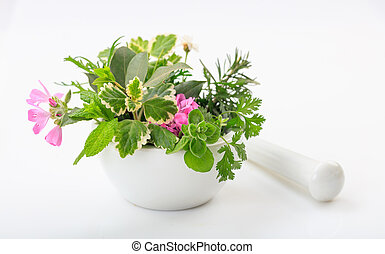 Herbs in a mortar on white background
