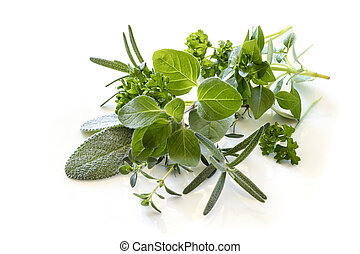 Herbs Isolated on White Backlit
