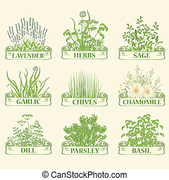 herbs, lavender, chamomile, chives, garlic, parsley, dill, sage and basil, herbal vintage background