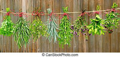 herbs on line - Various fresh herbs hanging in bundle to dry...