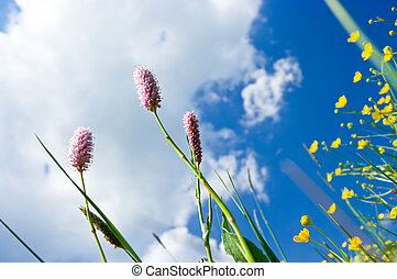 Herbs on the meadow and blue sky