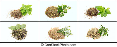 Herbs on white background collage
