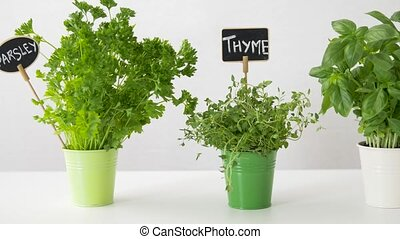 herbs or spices with name plates in pots on table - healthy ...