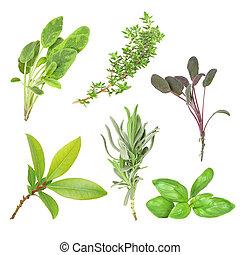 Herbs - Organic herb selection of leaves of variegated sage...