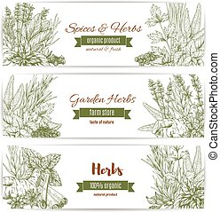 Herbs, spices and leaf vegetables sketch banner