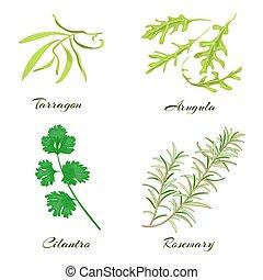 Herbs. Tarragon, arugula, cilantro or coriander, rosemary...