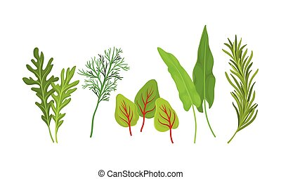Herbs Used in Culinary and Cooking Vector Set