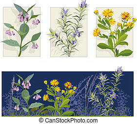 Herbs - Vector illustration of herbs calendula, rosemary,...
