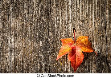 herbst, ahornholz- blatt, aus, altes , hölzern, hintergrund