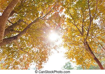 Herbst, Bäume, hintergrund