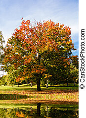 Herbst, baum, See