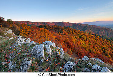 herbst, berg, wald, panorama