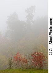 herbst, busch, nebel