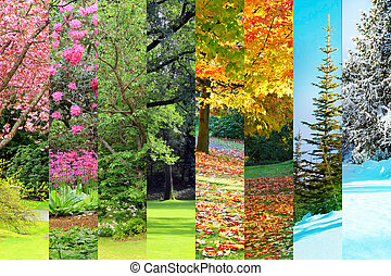 herbst, collage, fruehjahr, sommer, winter
