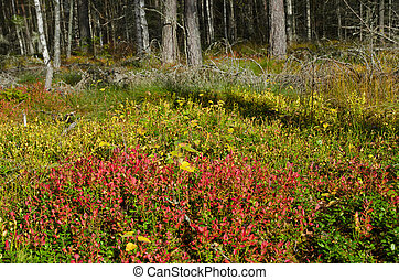 herbst, farbe, lingonberry, sprigs