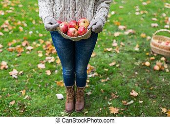 herbst, frau, kleingarten, äpfel