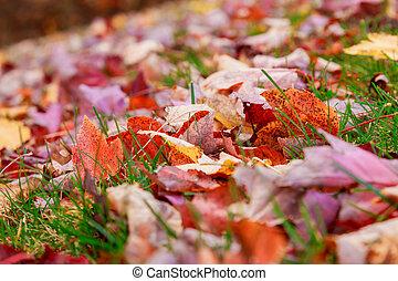 herbst, gefallen, leaves., sonnenlicht, strahl