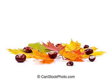 Herbst Kastanien Weißes Blätter Tanne Kastanien Stockbild