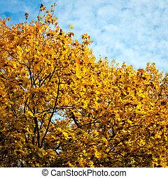 Herbst, hintergrund, Bäume