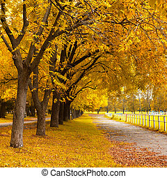 herbst, in, a, park