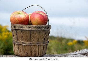 herbst, korb, äpfel