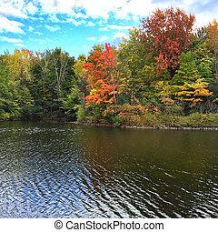 herbst, lakeshore, bäume