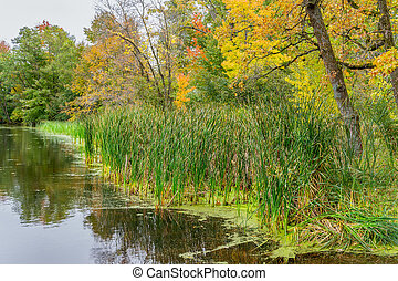 herbst, lakeshore, gebürtig, gräser