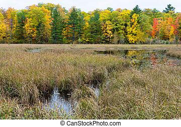 herbst, lakeshore, gebürtig, sumpf, gräser