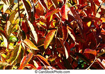 herbst, leaves.