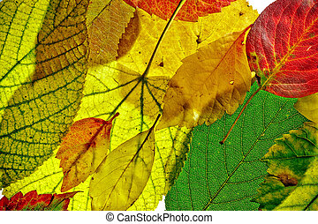 herbst, muster