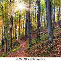 herbst, mystisch, wälder, morgen