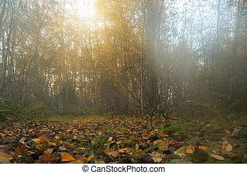 herbst, nebel, wald, hintergrund, sonnenaufgang
