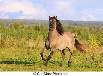 herbst, pferd