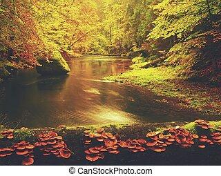 herbst, river., bunte, herbst, flußufer, an, schnell, bach, unter, goldenes, altes , bäume