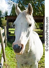 herbst, sonne, pferd, weißes