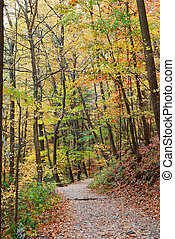herbst, spur, in, wald
