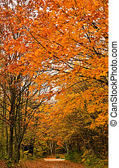 herbst, spur, wald