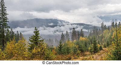 herbst wald, landschaftsbild